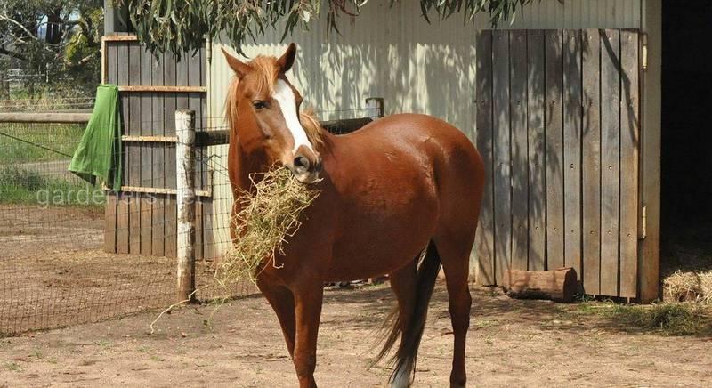Что лучше для лошадей: коммерческий корм или подножный