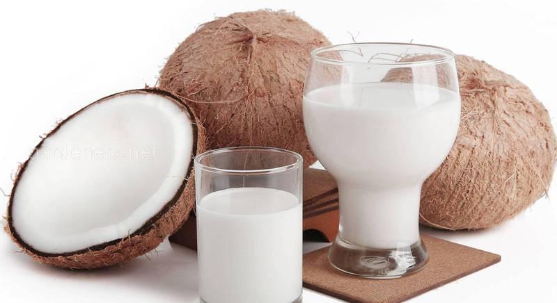 Как самостоятельно сделать кокосовое молоко из свежего кокоса