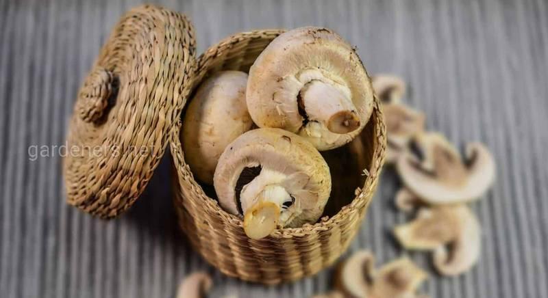 Заморозка грибов в домашних условиях