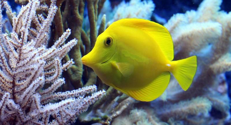 Опис 10 найпопулярніших рибок для акваріума