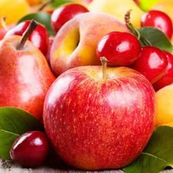 Питомник Плодовых растений