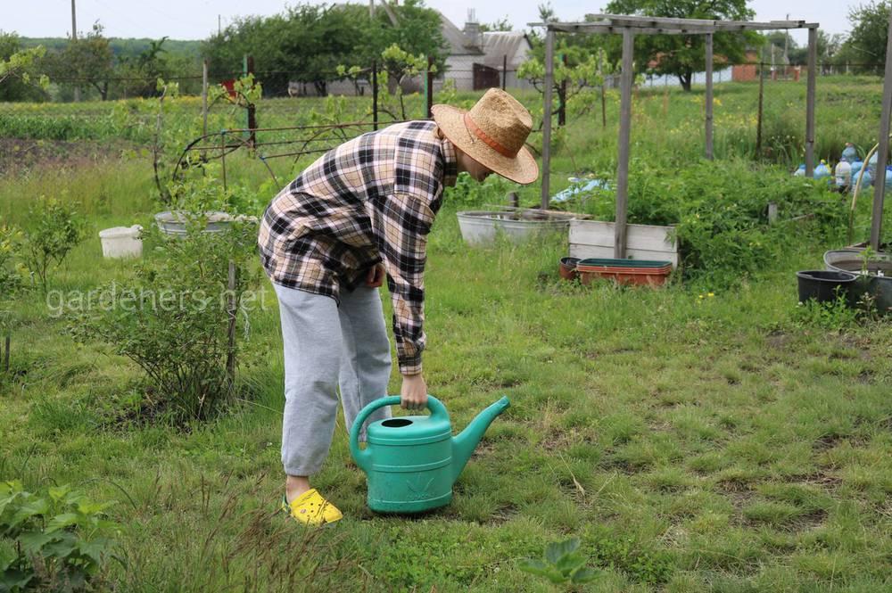 Правила роботи на городі в спеку