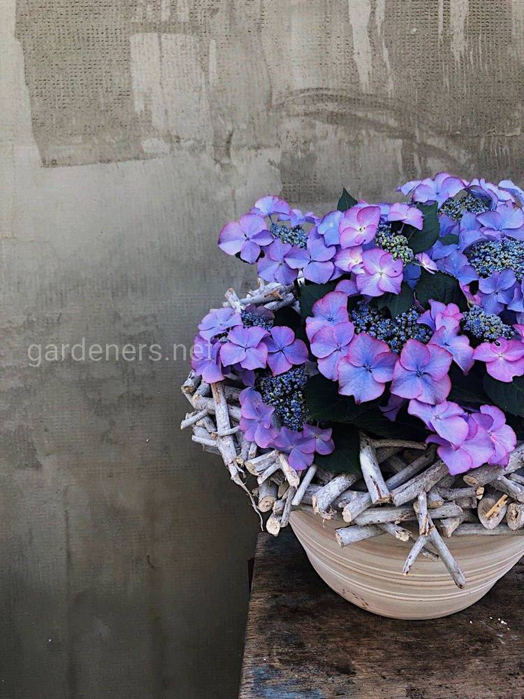 Растения для озеленения сада и создания цветников
