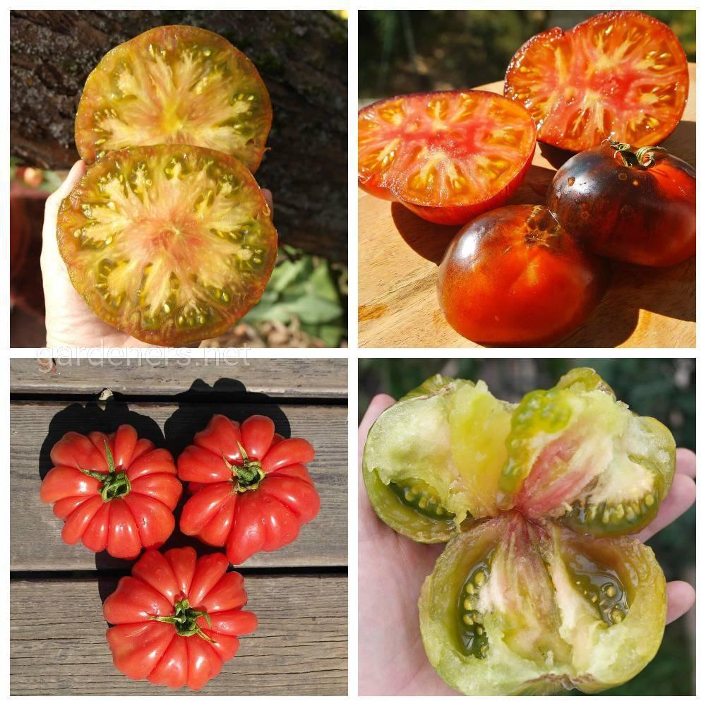 коллекцией томатов