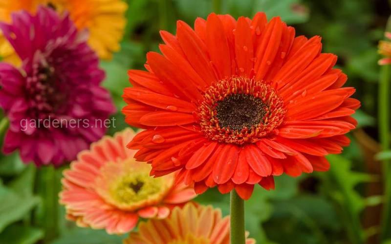 Які квіти цвітуть восени?