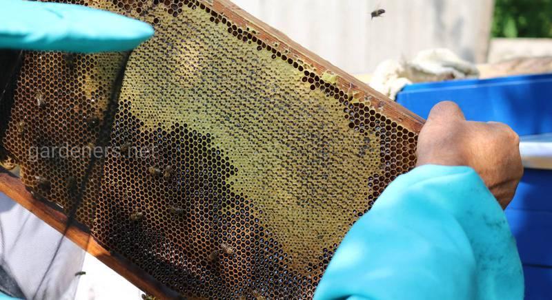Пчеловодство в конце мая и июне