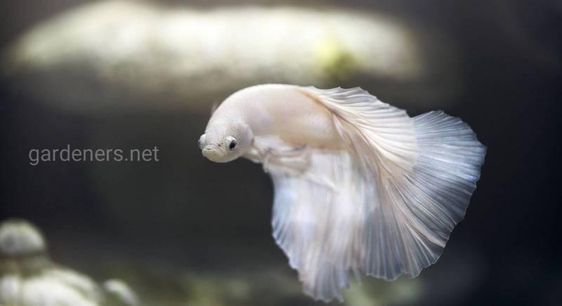 Акваріумні рибки: рідкісні види