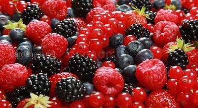 Как правильно заморозить ягоду