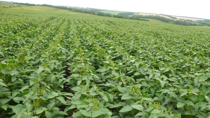 Органическое производство сои! Технология выращивания !