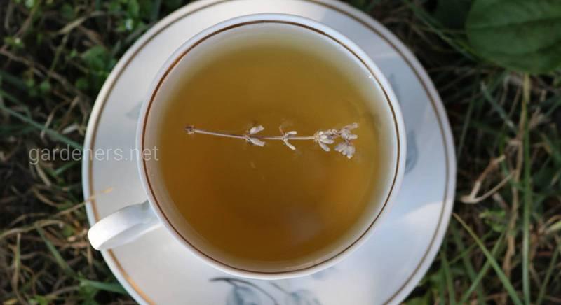 Зеленый чай - влияние на здоровье и возможные побочные эффекты