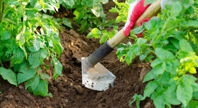 Як визначити значення рН ґрунту?