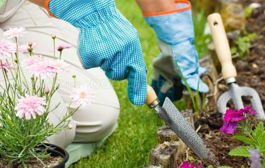Правила высадки культур в цветнике