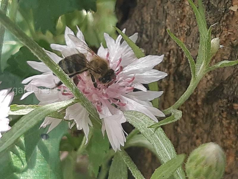 Почему одиночные пчелы — это наше будущее?