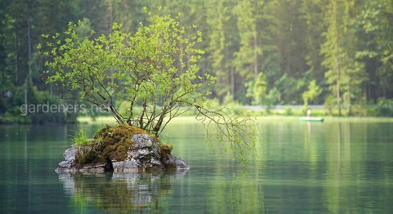 Правила безпечного відпочинку біля водойми