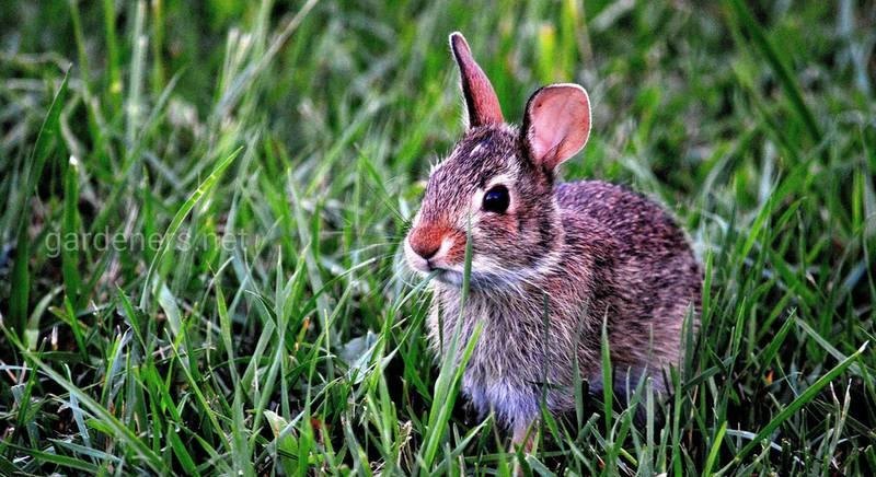 Какой травой можно и нельзя кормить кроликов