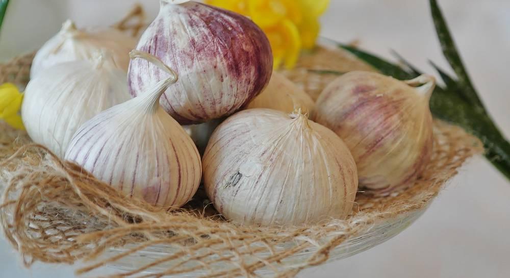 Секреты агротехники озимых сортов чеснока