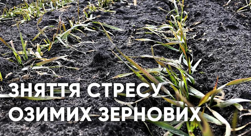 Зняття стресу озимих зернових