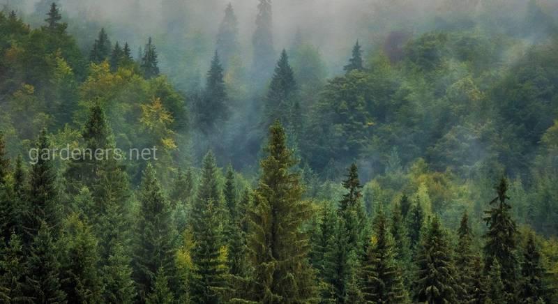 Проблема вирубки лісів