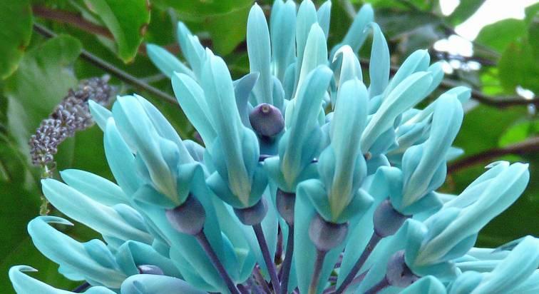 нефритовый цветок.jpg