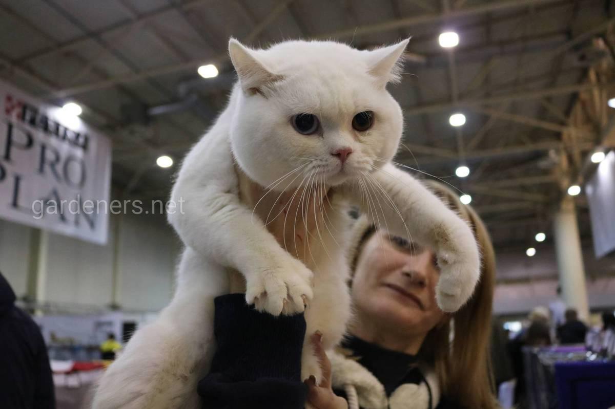 животные белого окраса которые имеют разноокрашенные глаза