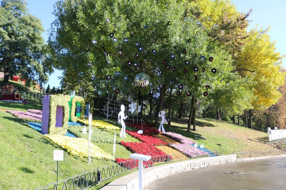 Фестиваль хризантем в Киеве