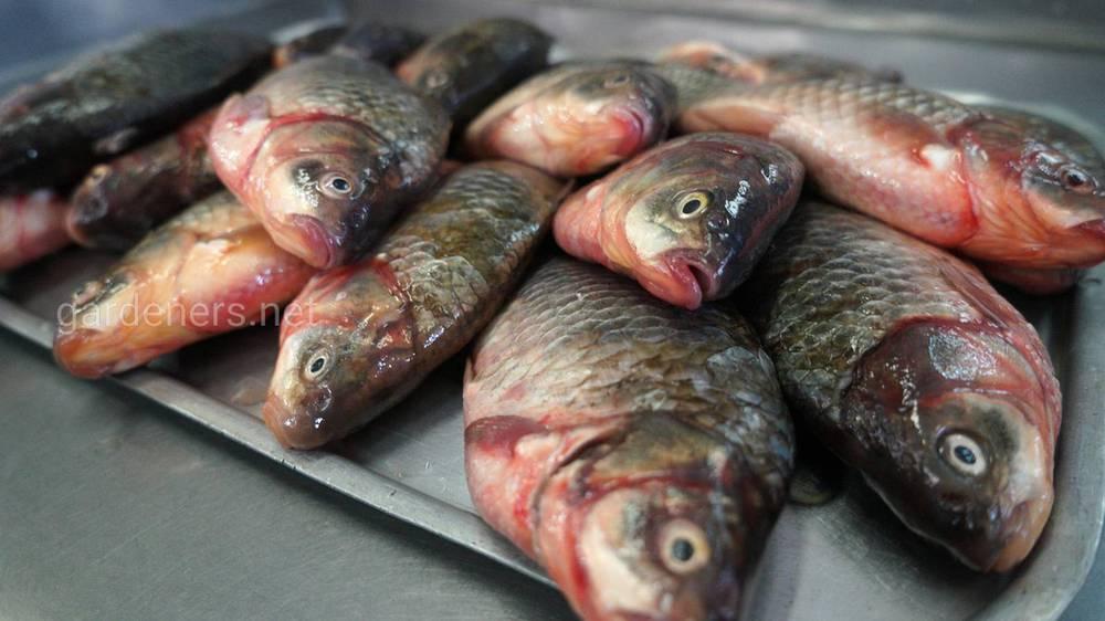 Всякая рыбка полезна ― и большая, и маленькая