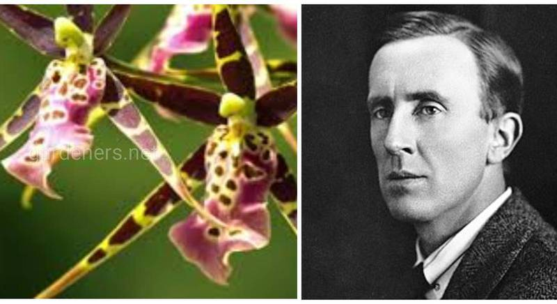 Виды животных и растений, названные в честь Джона Рональда Руэла Толкина