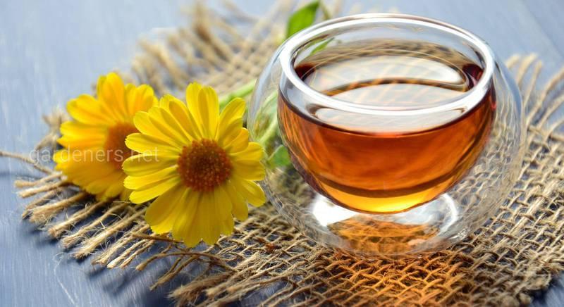 Цілющі властивості чаю з календули