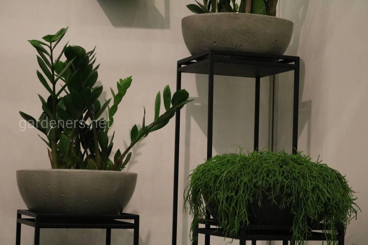 Вазоны с растениями