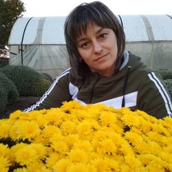 Галина хризантемы мультифлора