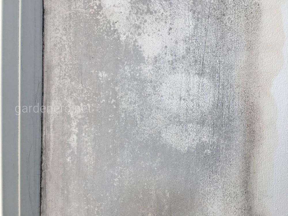 Заплесневелые стены