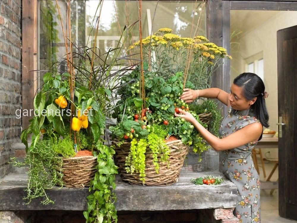 Мини-огород в квартире