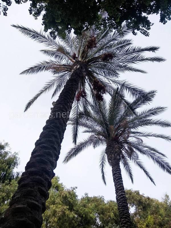 Топ-13 интересных фактов о пальмах