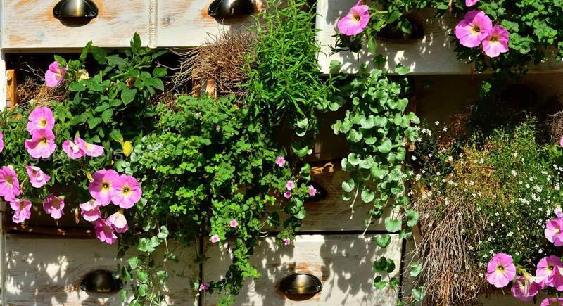 ТОП-6 композиций из ампельных растений: варианты размещений и сочетаний