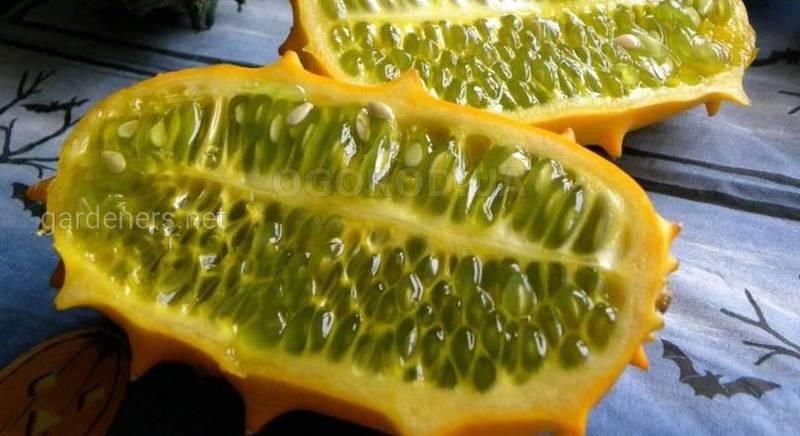 Вирощування незвичайного фрукта( овоча) - ківано стає все більш популярним