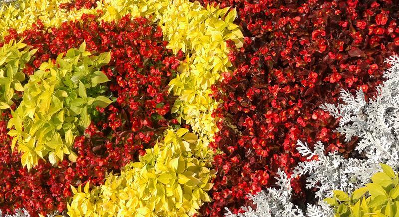 Сочетание цветов в цветнике