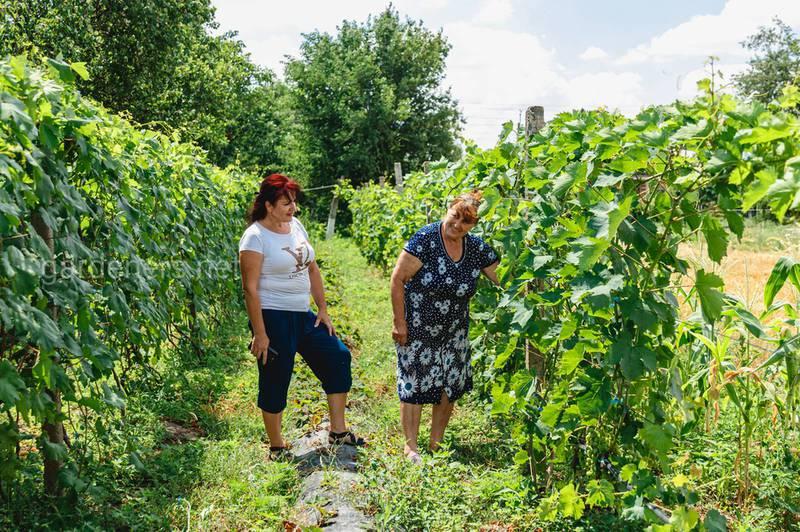 Что необходимо исключить или поставить под контроль в случае органического производства винограда?