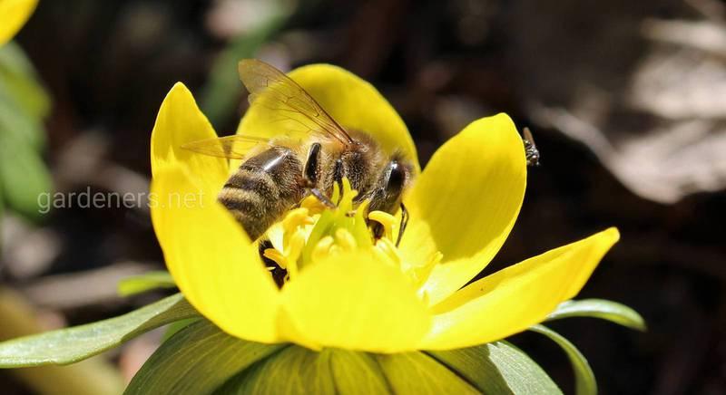 Перевезення та пересилання бджіл і маток