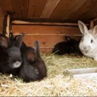 ЛПХ Кроликомания