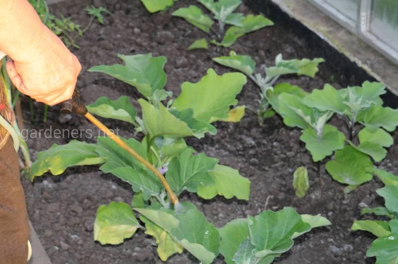 Яке значення мають позакореневі добрива в рослинному харчуванні? Приклади позакореневого добрива