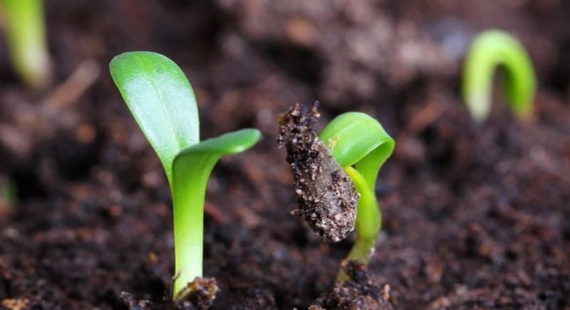 Посадка семян цветов под зиму: плюсы и минусы