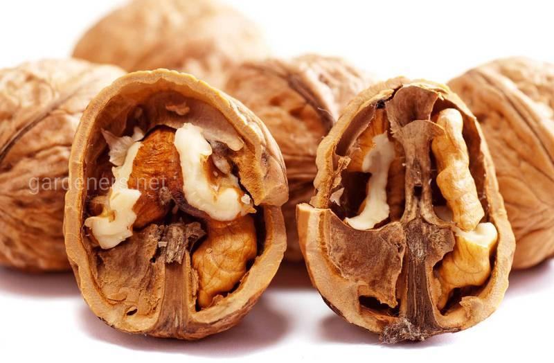 Как приготовить настой из перегородок грецкого ореха и чем он полезен для вашего здоровья?