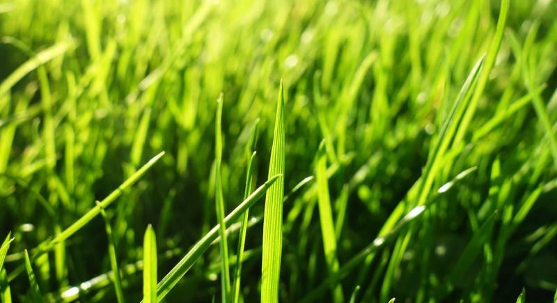 Основные правила ухода за газоном летом. Как проводить досев газона?
