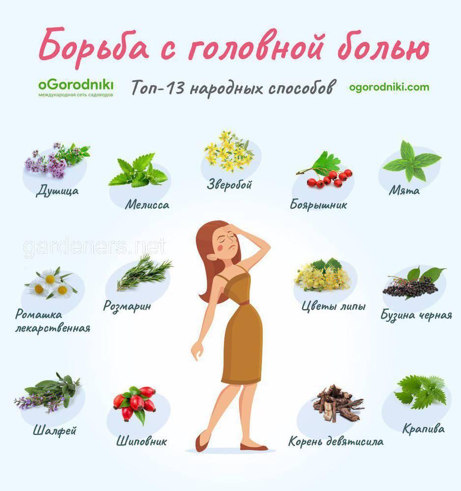 натуральное средство от головной боли список лекарственных трав которые заменят таблетки огородники