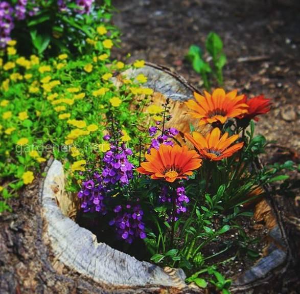 Перетворюємо пень на квітучу рослину