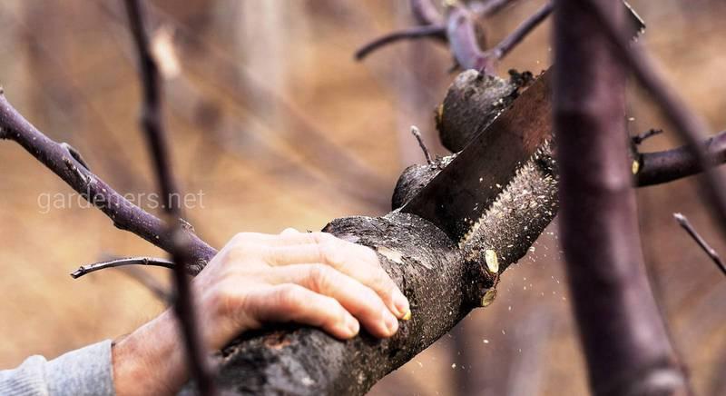 Как спилить деревья в саду: правила, рекомендации, пошаговая инструкция