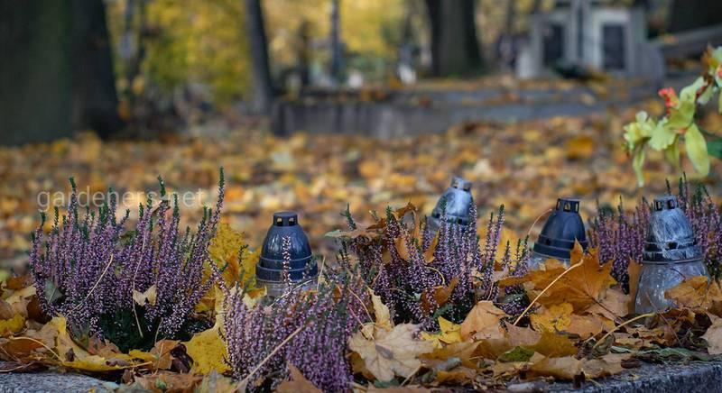 Топ-10 деревьев и кустарников для посадки на кладбище