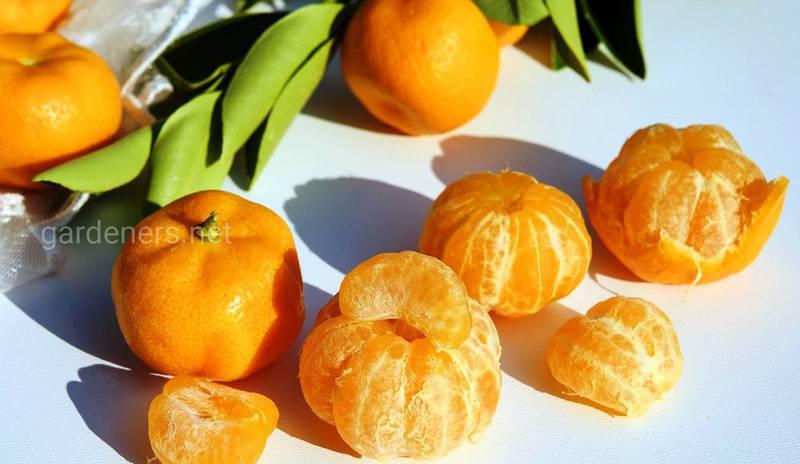 Які лікувальні властивості мандаринової олії?