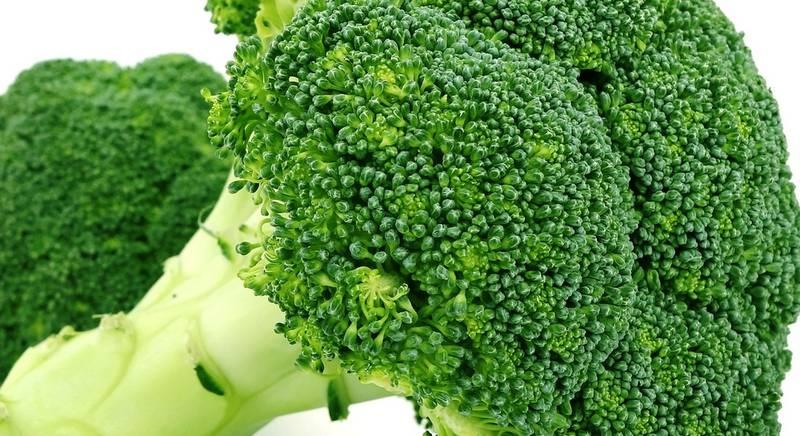 Выращивание брокколи в открытом грунте. Популярные сорта брокколи