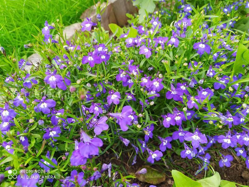 Які весняні квіти підійдуть для вашої тераси?